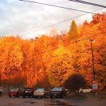 2013 Photo Gallery - Spectacular illustration of Hudson Valley autumn hues. This one in the Rite Aid parking lot on Route 203 in Chatham, NY.
