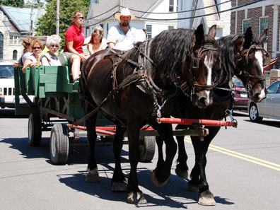 2011 photo gallery - Free horse and carriage rides during the Chatham Summerfest 2011